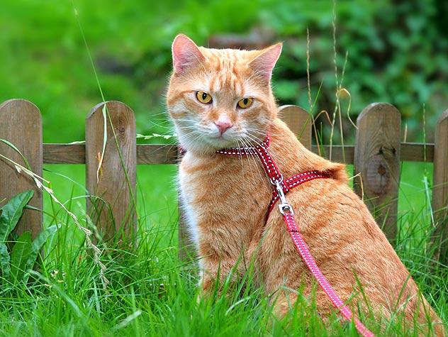 99843837-cat-outdoor-indoor-632x475